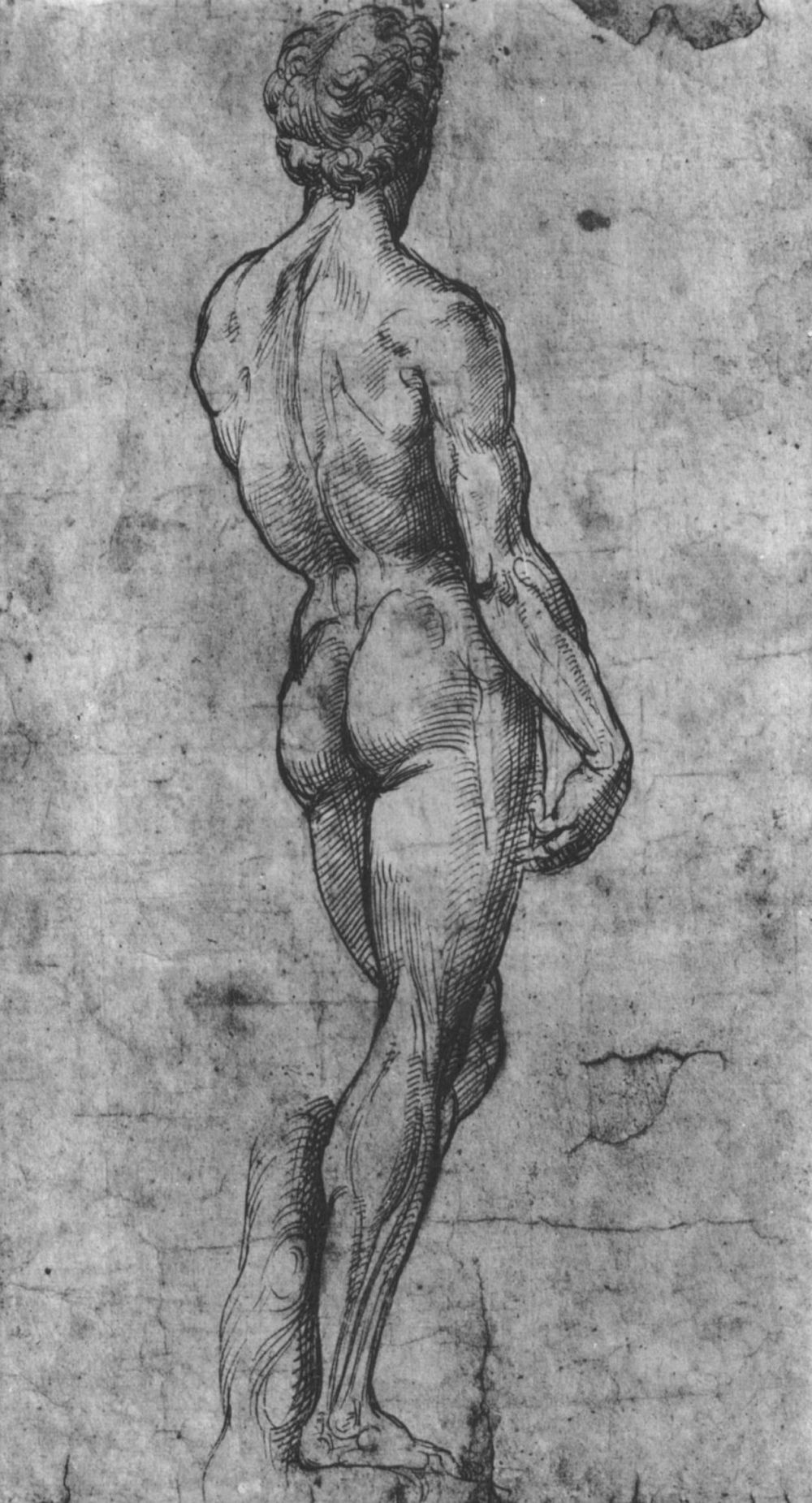 """Raphael Santi. Nude from the back (with the """"David"""" of Michelangelo)"""