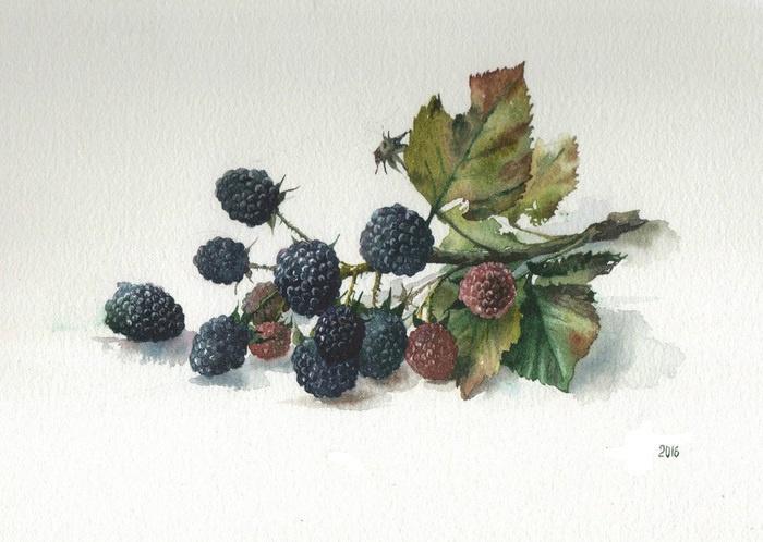 Unknown artist. Berries