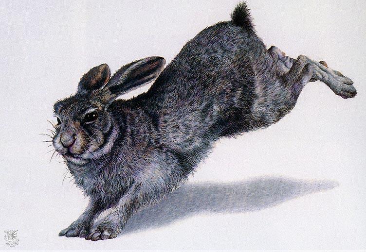 Майк Рассел. Кролик