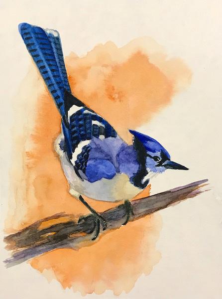 Larissa Lukaneva. Blue jay. Sketch.