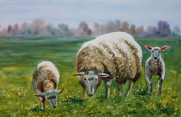 Larissa Lukaneva. Sheep