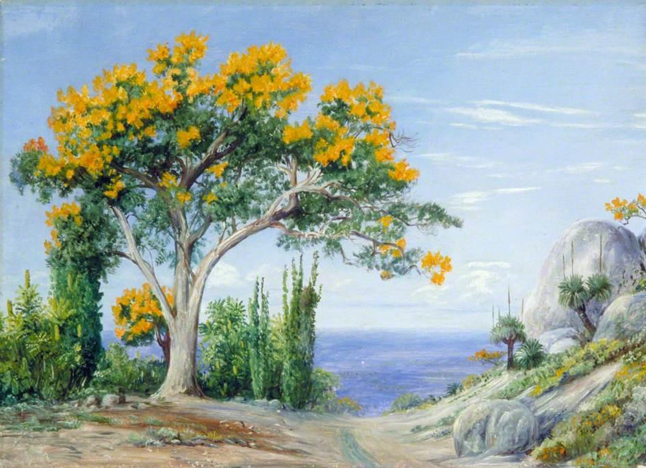 Марианна Норт. Огненное или пылающее дерево (Делоникс королевский), Западная Австралия