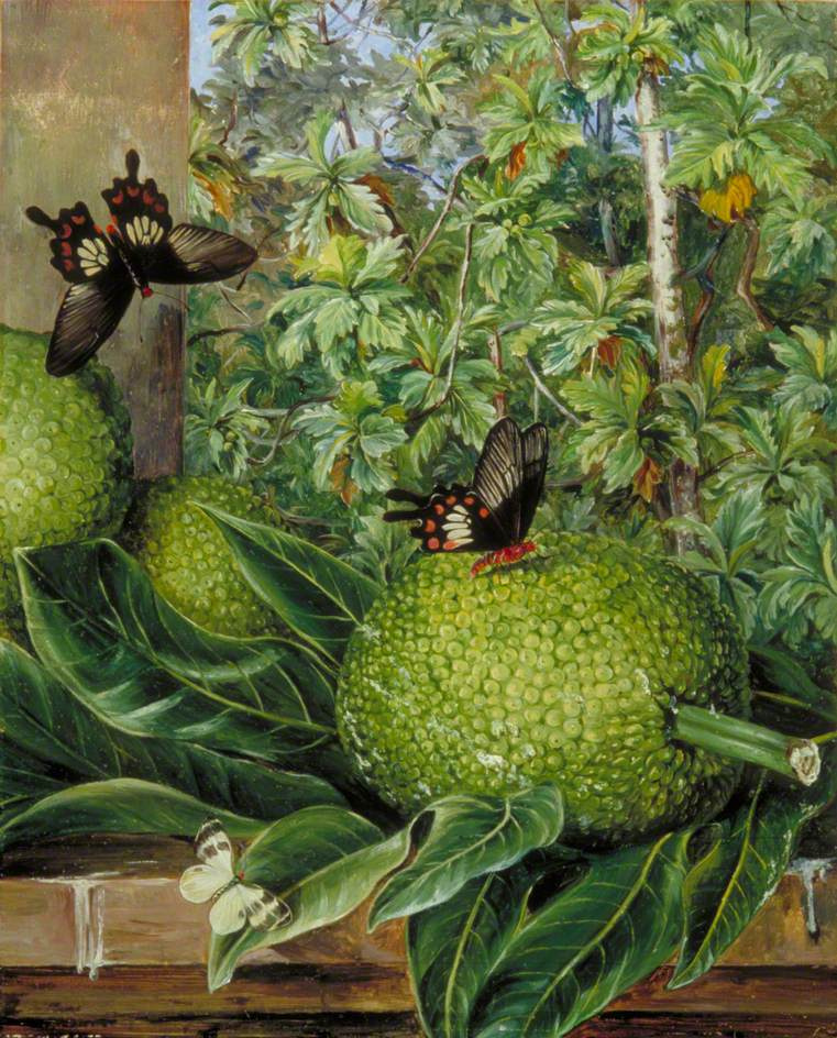 Marianna North. Butterflies and Breadfruit, Singapore