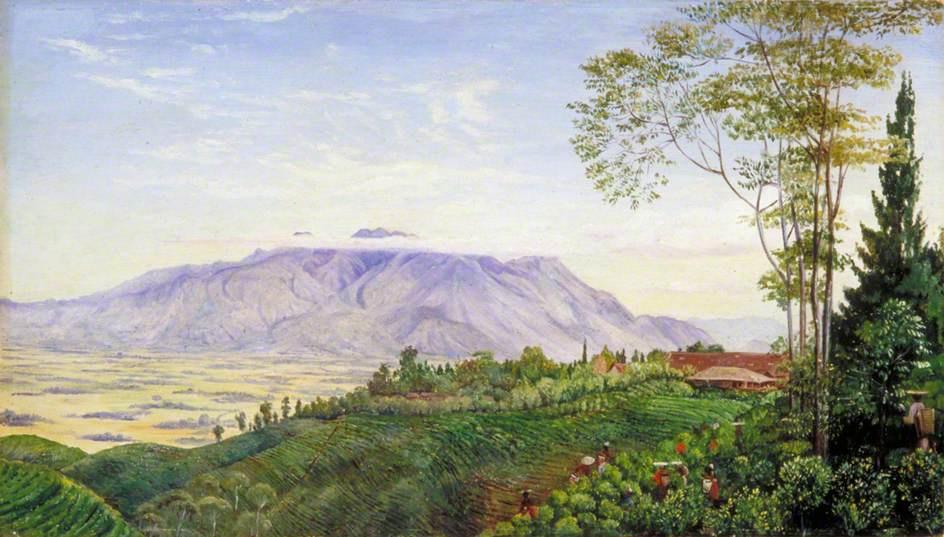 Марианна Норт. Сбор чая на плантации в Гарое, Ява