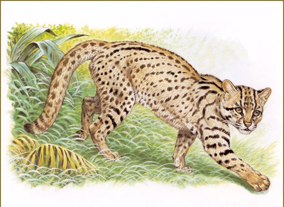 Robert Dallet. Leopard Of Sumatra