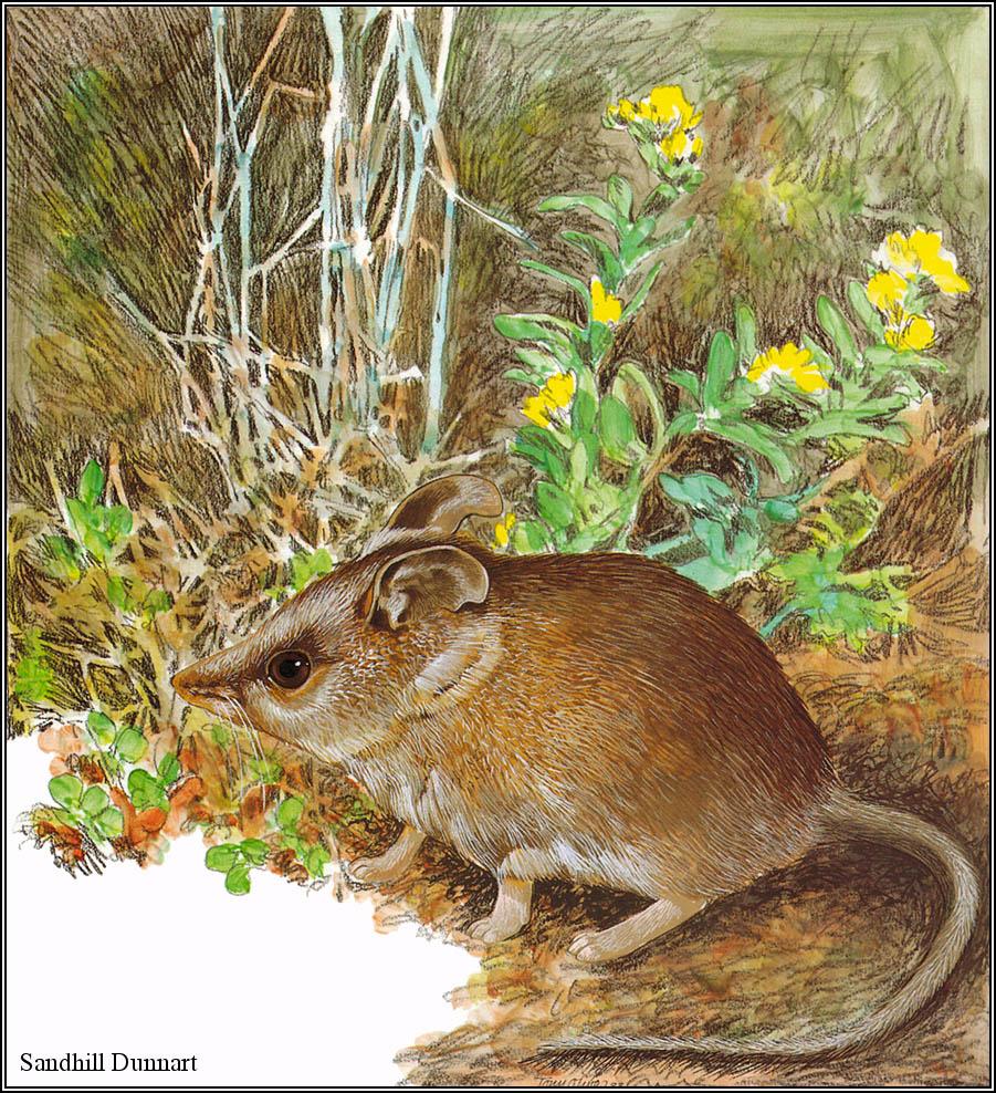 Toni Oliver. Australian endangered species 18