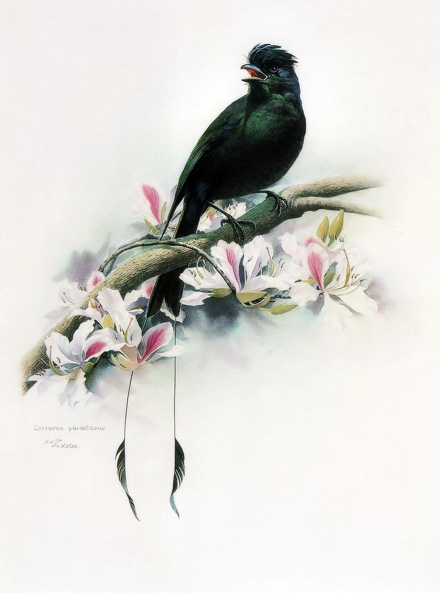 Zeng Xiao Lian. Birds 16