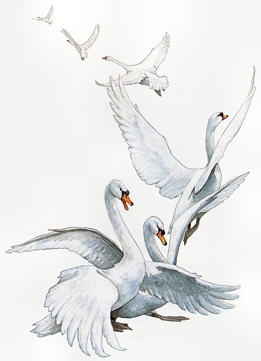 Patrick James Lynch. Illustration to the book the Six swans 03
