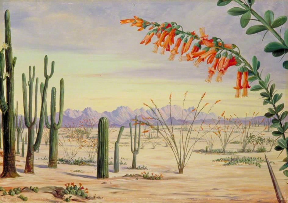 Marianna North. Plants in the Arizona desert