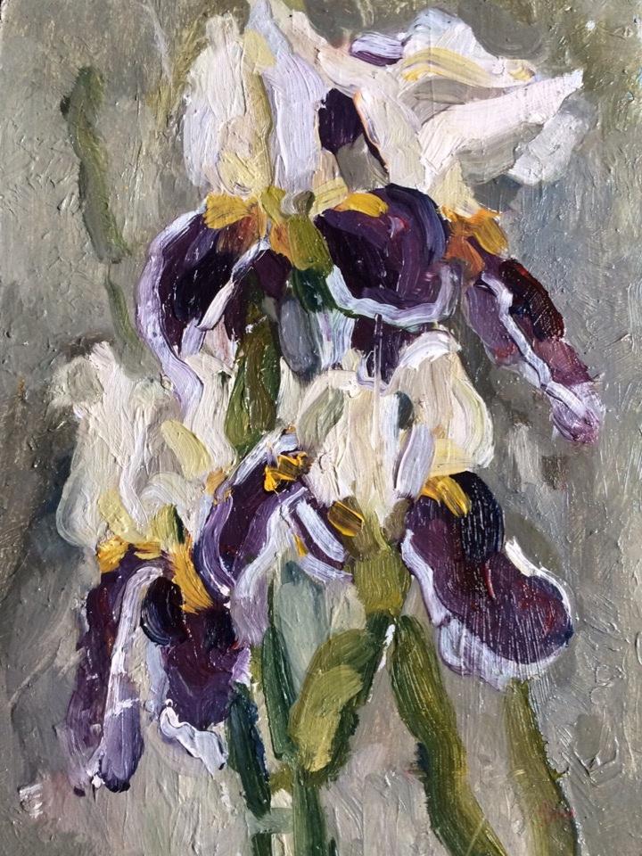 (no name). Irises