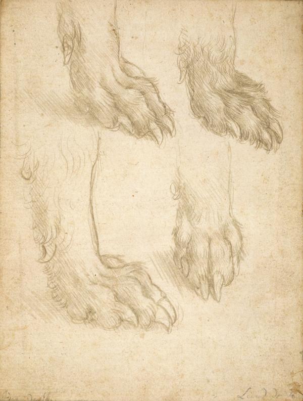 Leonardo da Vinci. Study of dog paws