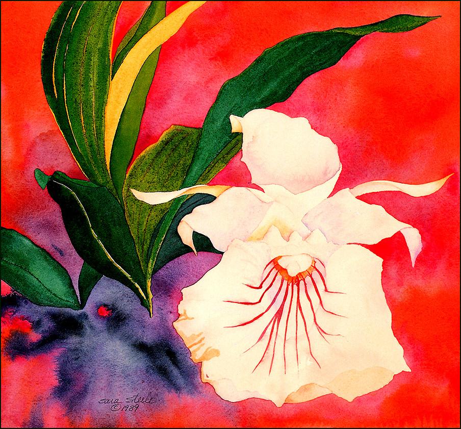 Сара Стил. Нежность цветов