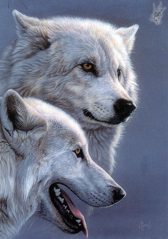 Аль Агню. Волки