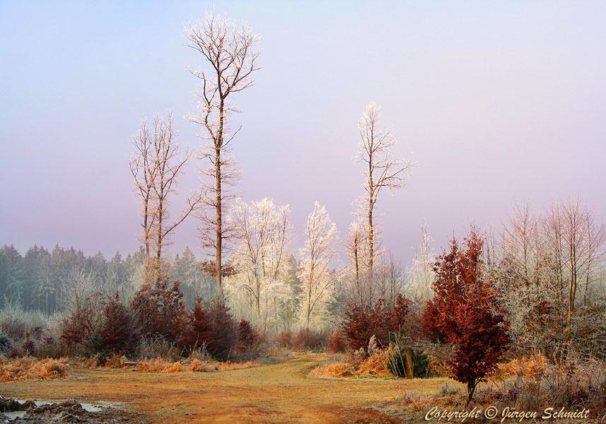 Юрген Шмидт. Edge of the forest