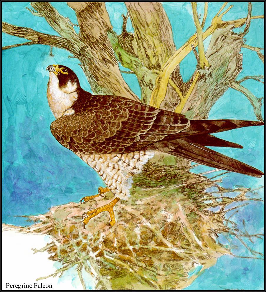 Тони Оливер. Австралийские вымирающие виды 06