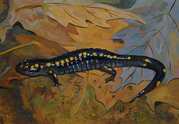 Larissa Lukaneva. Salamander