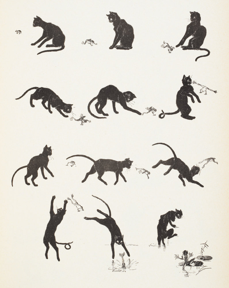 Theophile-Alexander Steinlen. Cats: pictures without words. The cat and the frog