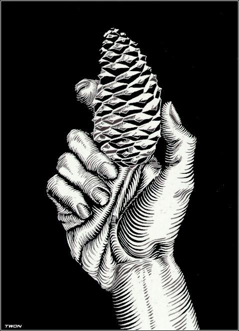 Мауриц Корнелис Эшер. Рука с еловой шишкой