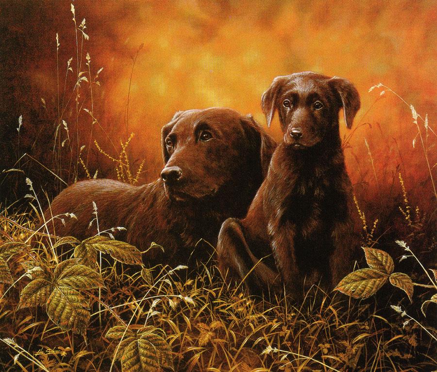 Nigel and Daniel Kevin Hamming. Dogs