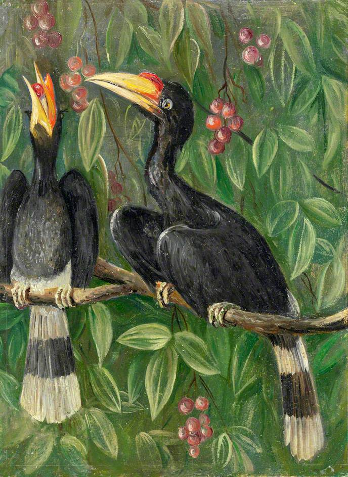 Marianna North. Hornbills
