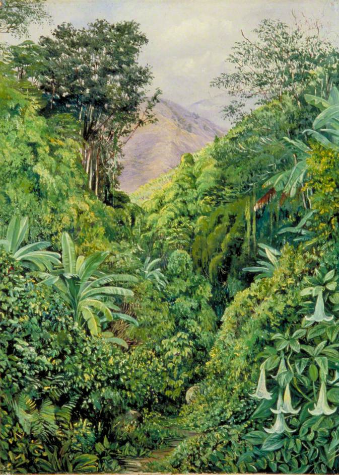 Marianna North. The entrance to the valley from Gordontown, Jamaica