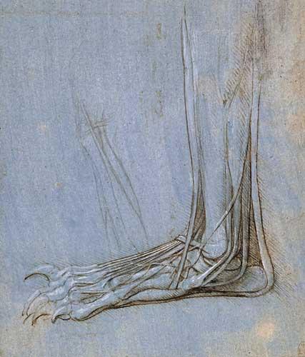 Leonardo da Vinci. Anatomy of the foot