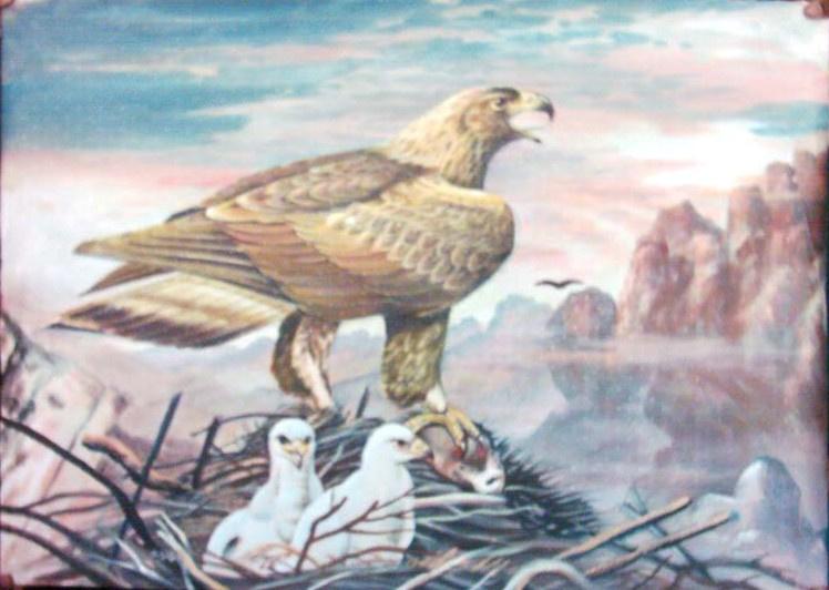 AbdulSalam. Eagle nest