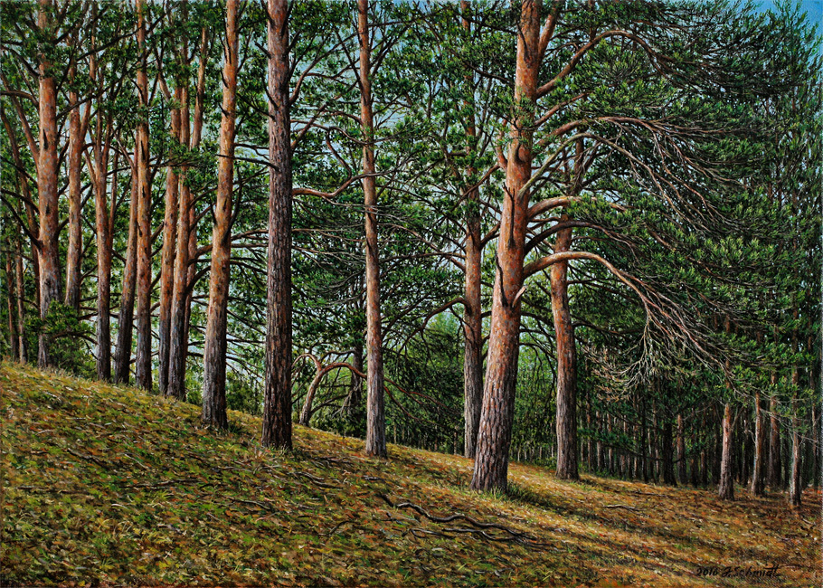 Юрген Шмидт. Pines on the slope