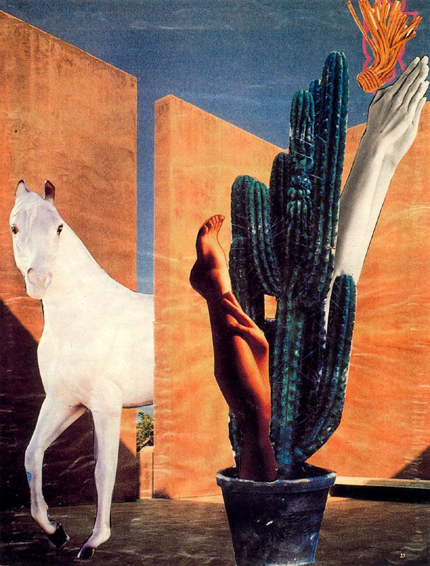 Ампаро Сегарра. Кактус и белая лошадь