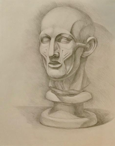 Лариса Луканева. Экорше. Мышцы лица.