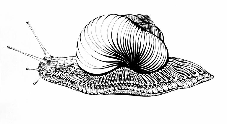 "Svetlana Sergeevna Malyodnik. Portrait of a snail ""Queen"""