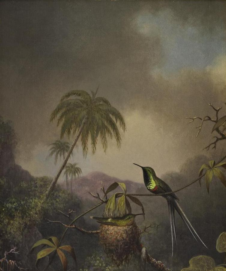 Martin Johnson Head. Hummingbirds in the nest against the background of the Brazilian jungle