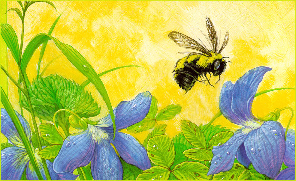 Bee flower drawing