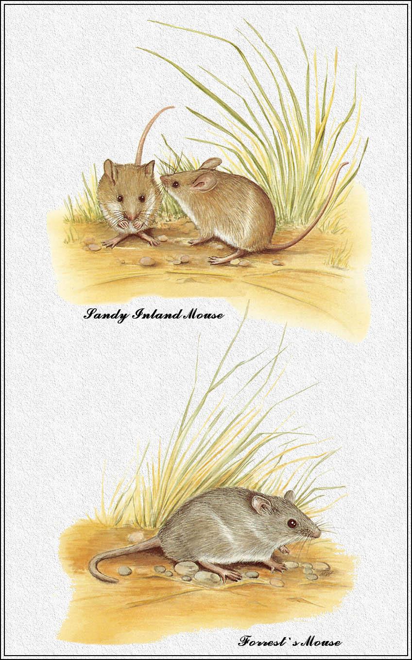Marion Westmacott. Australian mammals 77