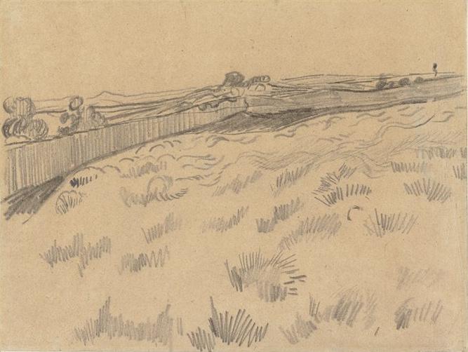 Поле пшеницы летом  bfotoru
