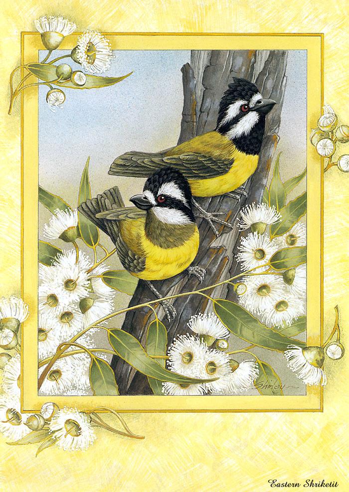 Птицы с открыток, брату лет