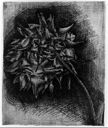Мауриц Корнелис Эшер. Цветок