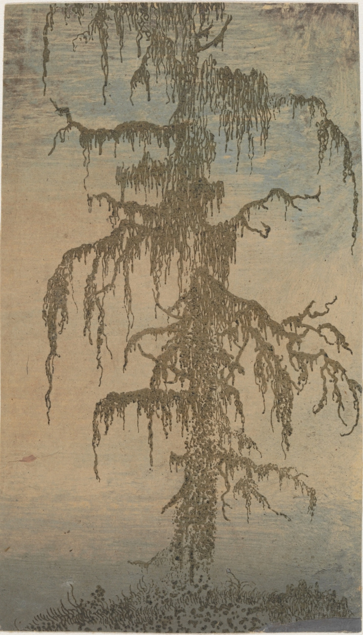 Hercules Segers. Tree in moss