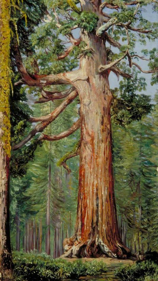"""Марианна Норт. """"Большой гризли"""". Гигантская секвойя в роще Марипоса, Калифорния"""
