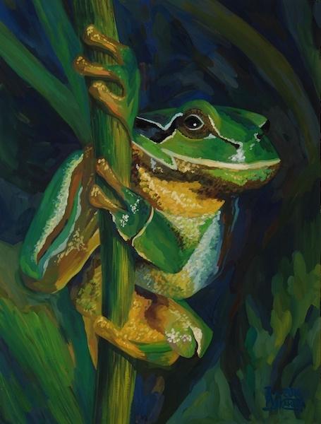 Larissa Lukaneva. Treefrog