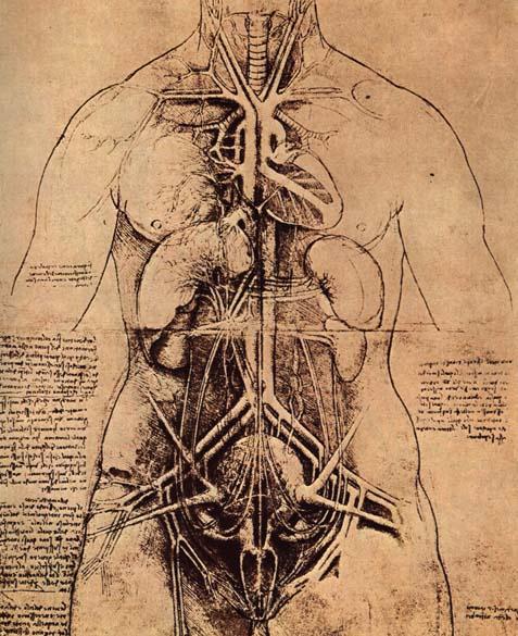 Леонардо да Винчи. Рисунок расположения органов в теле женщины