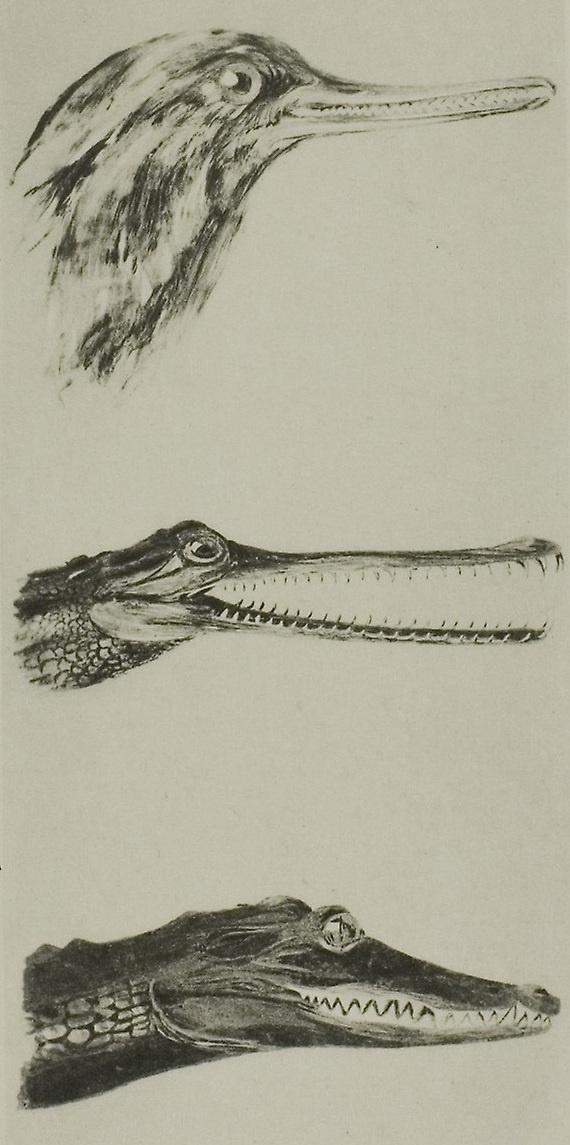John Ruskin. Head of a duck and two crocodiles