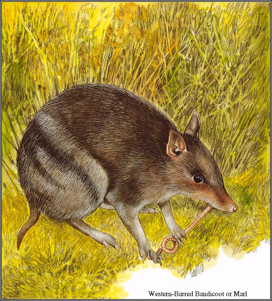Тони Оливер. Австралийские вымирающие виды 24