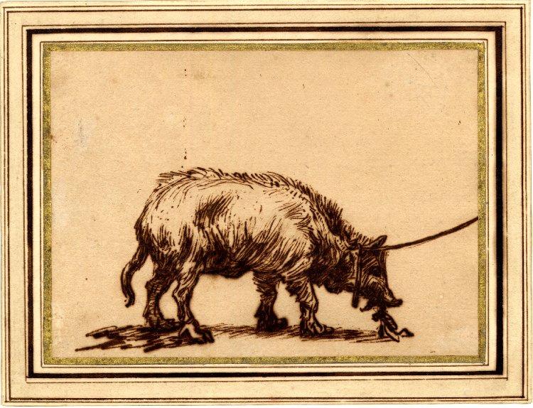 Rembrandt Harmenszoon van Rijn. A tethered pig