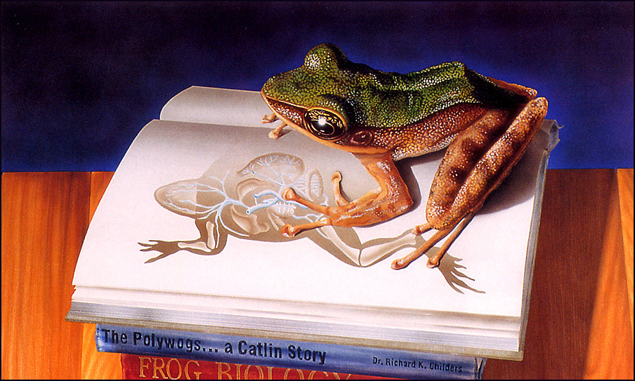 Ekaterina Sharp. Frog