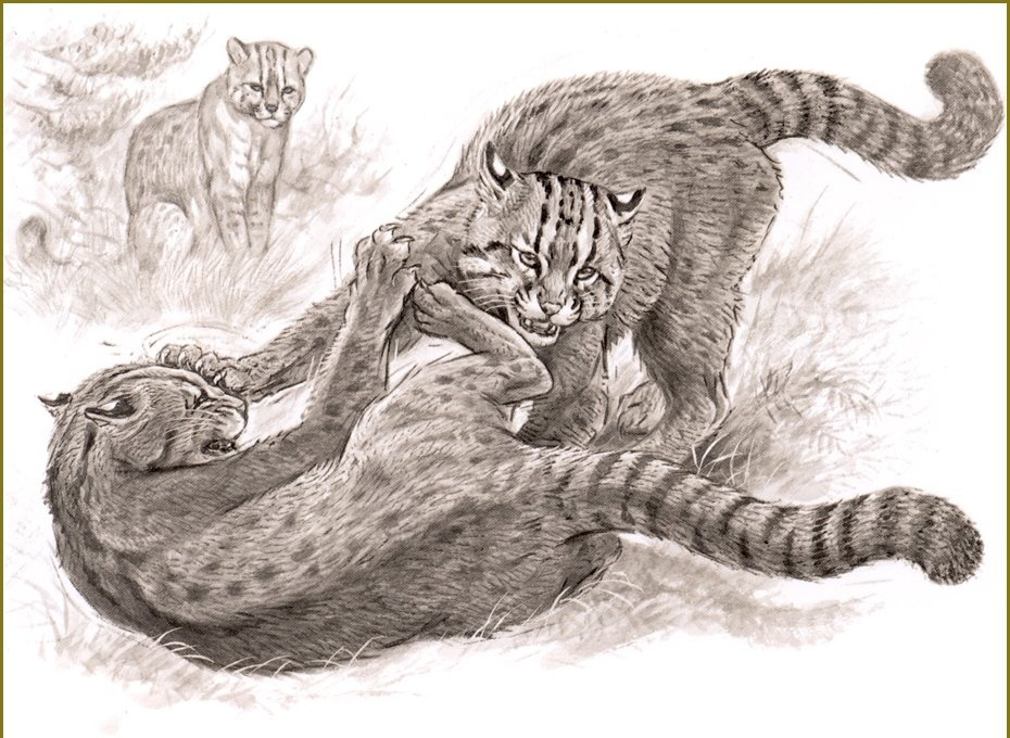 Robert Dallet. The Siberian cat