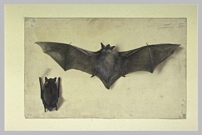 Albrecht Dürer. Bat