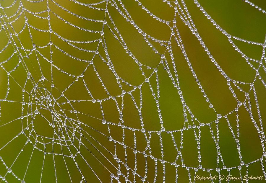 Юрген Шмидт. Spider web
