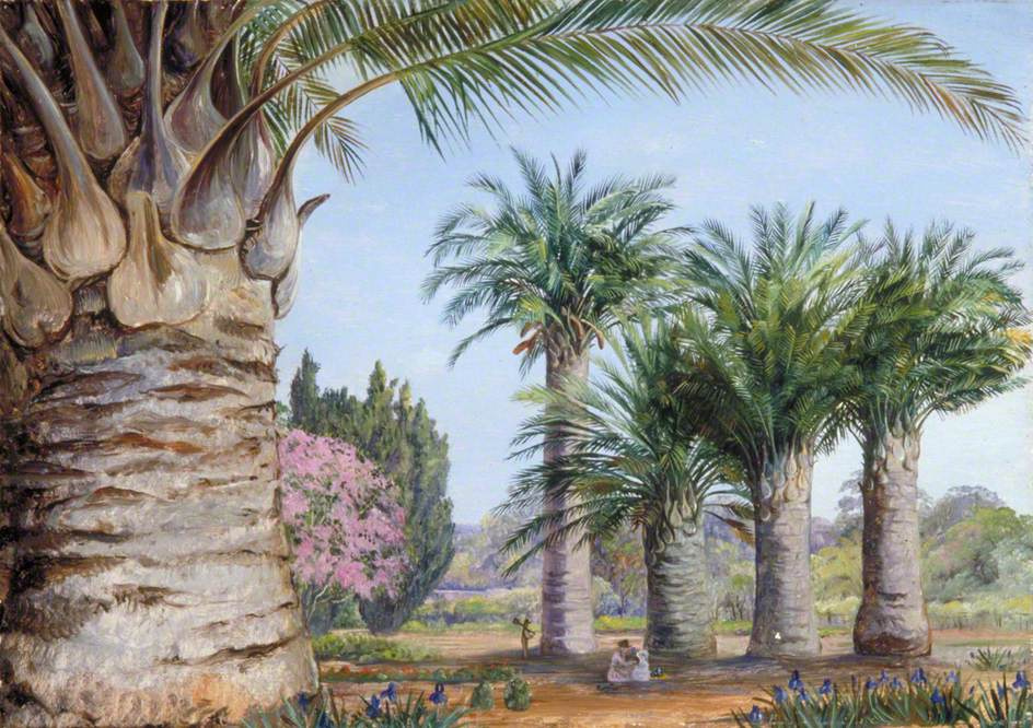 Marianna North. Chile Coconut Trees in Camden Park, New South Wales