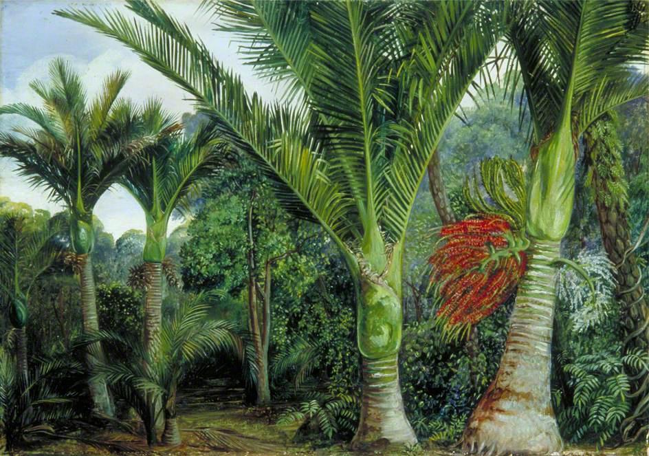 Marianna North. Palm Trees, New Zealand